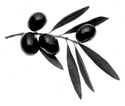 olive_branch
